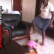 Horrible: VIDEO que maldita asarosa esta ninera miren Babysitter Beats, Slams, And Stands On A Helpless Baby