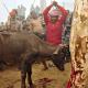 Fotos estremecedoras: Sacrificio masivo de animales en honor a una diosa en Nepal