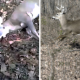 VIDEO Tremendo susto pobre hombre Deer Plays Dead And Scares The Crap Out Of Hunter