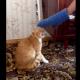 Tienen que ver esto gato que tiene el diablo metio Cat Teaches Guy A Lesson For Messing With It!