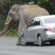 VIDEO Elefante en medio de un trafico destrullendo todo Troll Elephant Sits On Cars In Traffic!