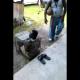 VIDEO Loco Se quedo atrapado en una jaula de gallina Man Gets Caught In His Own Chicken Trap!
