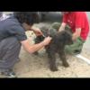 VIDEO miren como quedo este pobre perro que diablo le paso digan