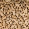 El consumo de maní en la infancia puede prevenir la alergia a ese alimento