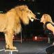 VIDEO Fue atacada por un leon salvaje Egyptian Circus Performer Attacked By A Lion In The Ring!