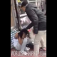 VIDEO cuantos golpes el diablo Girl Puts A Whooping On Her Friend For Stealing Money From Her!