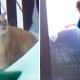 VIDEO Gato tumbo una casa Snowplow Cat Coming Through