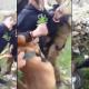 Video: Soldados israelíes azuzan sus perros contra un adolescente palestino