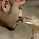 VIDEO Murio por bruto Malaysian Snake Charmer Kisses Species Of Venomous Snake That Killed His Father!