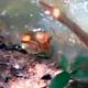 VIDEO Casi muere de una mordida de serpiente Poking An Anaconda With a Stick Is a Bad Idea