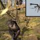 VIDEO A esta chimpancé no le gustan los 'drones' que asta tumbo uno miren