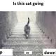 Nuevo debate en que dicen ustedes ¿el gato sube o baja las escaleras?