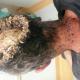 Video Fuerte Hombre con la cabeza llena de gusanos Head infected to the bone *Graphic*