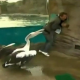 VIDEO Ganzo picotea un hombre asta matarlo News Reporter Attacked On Live Tv By A Pelican!