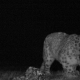 Video: Rusia imágenes insólitas de varios leopardos de las nieves Первое видео ирбиса в национальном парке Сайлюгемский