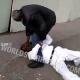 Video Que maldito machetaso en la cabeza Two Old Heads Go At It, One Gets Beat With A Stick!