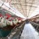 Gripe aviar en EE.UU.: Iowa es el tercer estado en declarar la emergencia