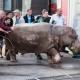 VIDEOS: Varios animales escapan del zoo de Tbilisi tras una inundación