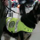 VIDEO 'Se ofrecen 70.000 dólares por la cabeza de este perro'