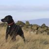 El hallazgo de un perro extraviado salva de 50 años de cárcel a un hombre condenado por abuso sexual