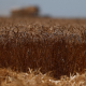 La sorprendente razón por la que el planeta se enfrentará pronto a una hambruna masiva