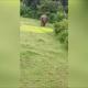 VIDEO: Un elefante mata a pisotones a un niño por acercarse demasiado a su manada death by 'agitated' elephants in India