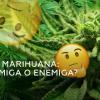 #Portugal: Entra en vigor la normativa que permite consumir #marihuana con fines médicos