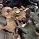 Jesu santicimo dios este perro Rottweiler sele mete el diablo y ataca un monton de personas