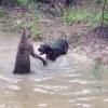 """Miren estos videos demaciado locos estan """"Kangaroo Tries To Drown A Dog"""