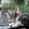 Video miren este gato que brito es :Cat Can't Get Wiper And Ponders The Point Of Life