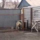 "VIDEO MIREN ESTE PERRO LO QUE HACES ""Dog Got Some Moves Jamming Out To His Favorite Tune"