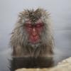"""MIREN ESTA BELLESA """"Los 'monos de nieve' que saben cómo lidiar con el frío"""