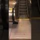 VIDEO: El triste final del 'entrenamiento cardio' de una rata en una escalera de metro de Nueva York