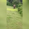 VIDEO: Un elefante mata a pisotones a un niño por acercarse demasiado a su manada death by 'agitated' elephants in India