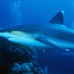 """""""No pude evitar gritar"""": Un tiburón le arranca con sus fauces la máscara a un buceador (VIDEO)"""