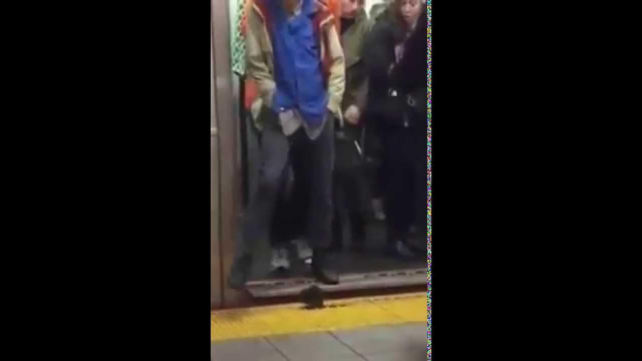 VIDEO Tremenda rata en el metro de new york causa panico Watch Your Step: NY Rat On A Mission!