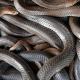 Miren esta Vaina Un pastor estadounidense pide que le devuelvan unas serpientes para las misas