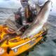 VIDEO Escalofriante Pesca un tiburón y casi le cuesta una pierna Crazy Shark Attack