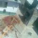Video MUY FUERTE Impactante Ataque de un perro donde acesina una persona